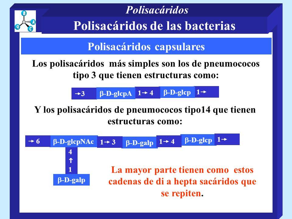 Polisacáridos capsulares Los polisacáridos más simples son los de pneumococos tipo 3 que tienen estructuras como: 1 -D-glcp 3 1 4 -D-glcpA Y los polisacáridos de pneumococos tipo14 que tienen estructuras como: -D-galp 4 1 -D-glcpNAc 6 -D-glcp 1 3 1 4 1 -D-galp La mayor parte tienen como estos cadenas de di a hepta sacáridos que se repiten.