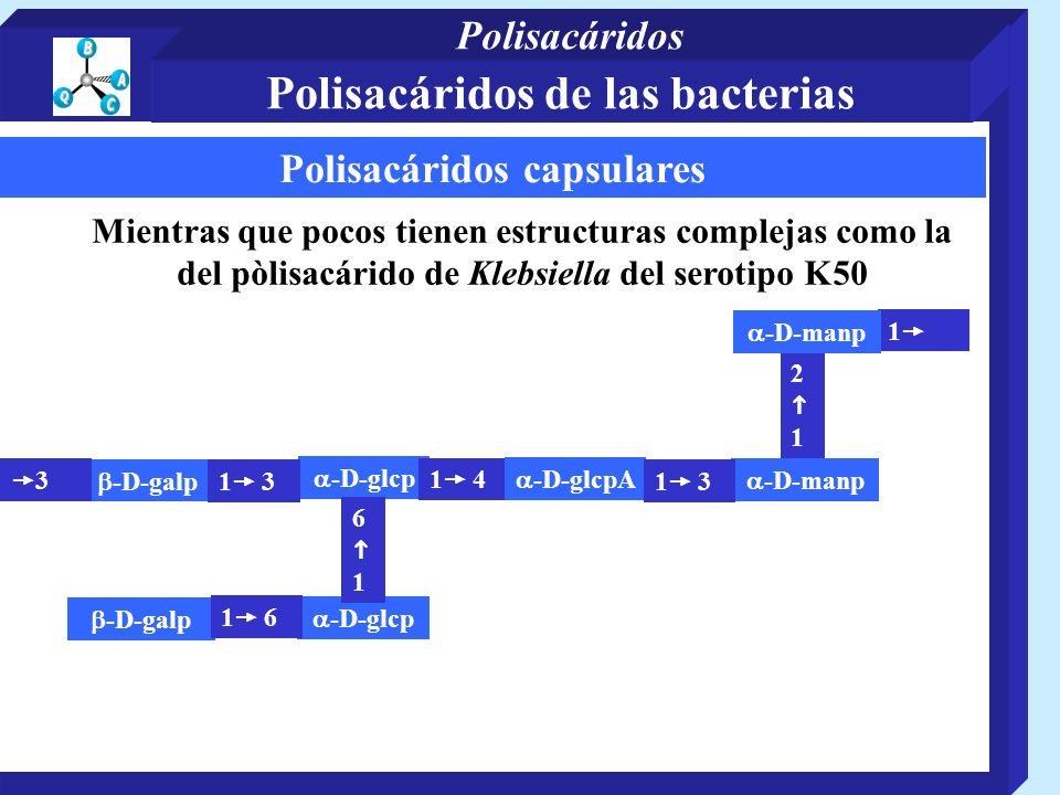 Polisacáridos capsulares Mientras que pocos tienen estructuras complejas como la del pòlisacárido de Klebsiella del serotipo K50 -D-galp 2 1 -D-galp -