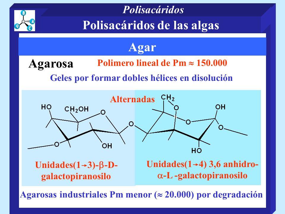 Agar Agarosas industriales Pm menor ( 20.000) por degradación Polimero lineal de Pm 150.000 Unidades(1 4) 3,6 anhidro- -L -galactopiranosilo Agarosa Unidades(1 3)- -D- galactopiranosilo Alternadas Geles por formar dobles hélices en disolución Polisacáridos de las algas Polisacáridos