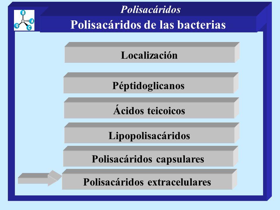 Péptidoglicanos Ácidos teicoicos Polisacáridos capsulares Lipopolisacáridos Polisacáridos extracelulares Localización Polisacáridos de las bacterias P