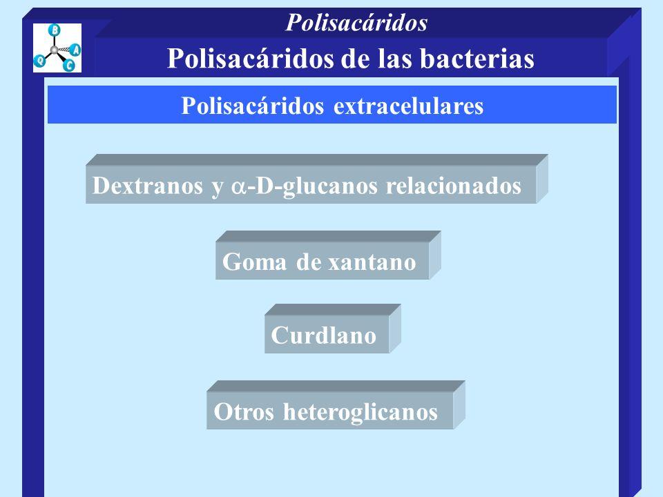 Polisacáridos extracelulares Dextranos y -D-glucanos relacionados Goma de xantano Curdlano Otros heteroglicanos Polisacáridos de las bacterias Polisacáridos