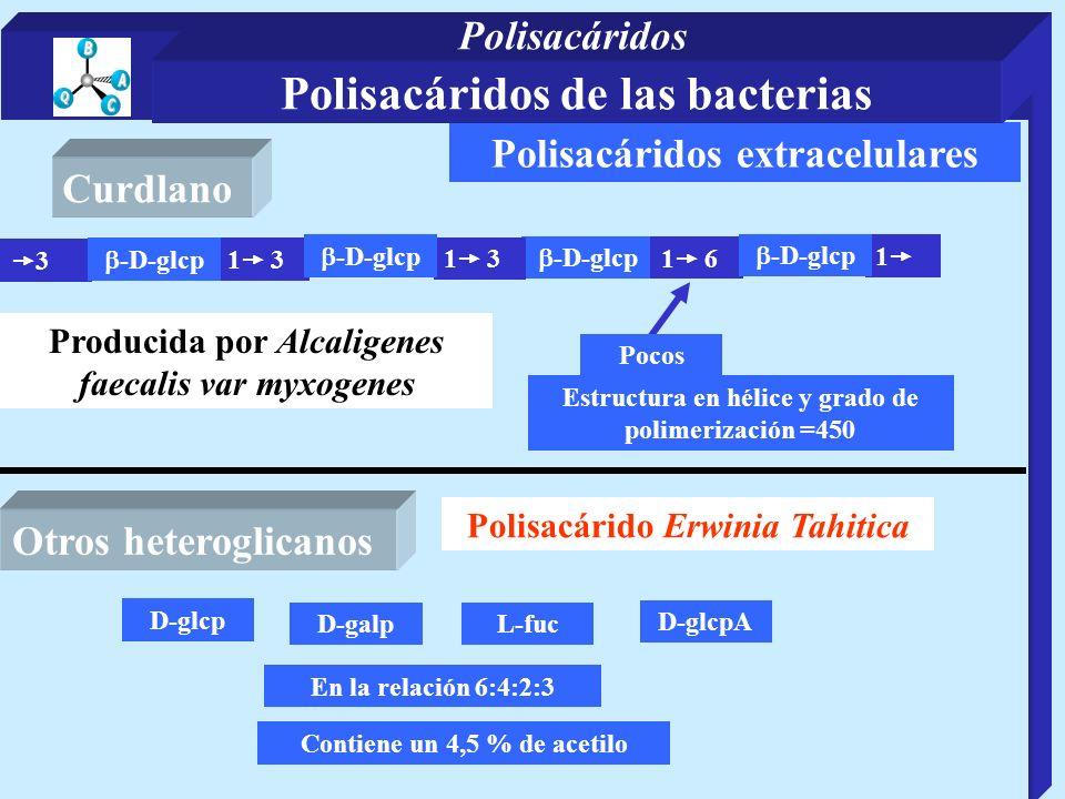Polisacáridos extracelulares -D-glcp 3 1 3 1 Estructura en hélice y grado de polimerización =450 -D-glcp 1 3 -D-glcp 1 6 -D-glcp Pocos Producida por A