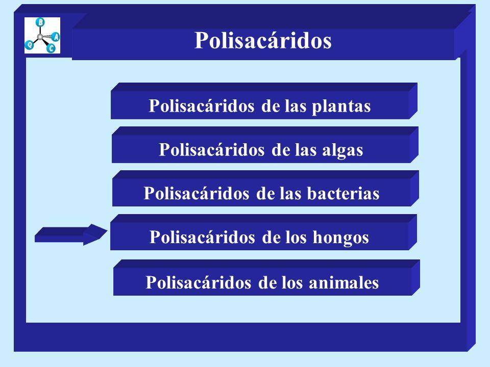 Polisacáridos de las plantas Polisacáridos de las algas Polisacáridos de los hongos Polisacáridos de las bacterias Polisacáridos de los animales Polisacáridos