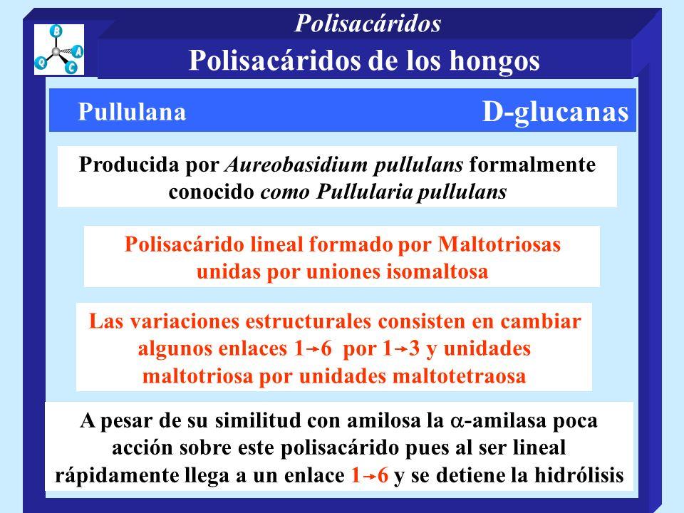 D-glucanas Pullulana Producida por Aureobasidium pullulans formalmente conocido como Pullularia pullulans Polisacárido lineal formado por Maltotriosas