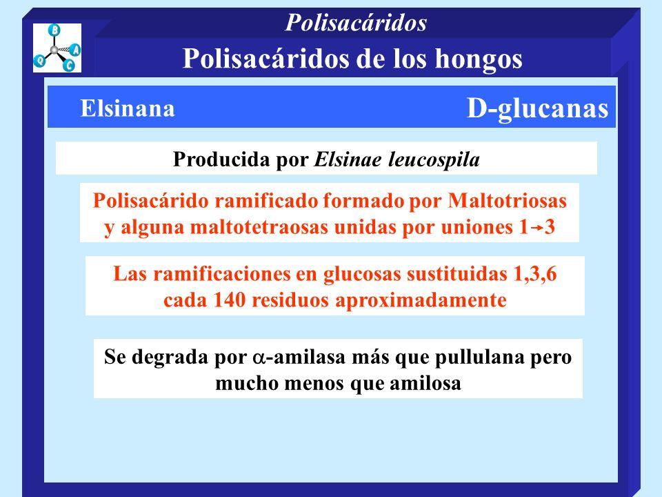 D-glucanas Elsinana Producida por Elsinae leucospila Polisacárido ramificado formado por Maltotriosas y alguna maltotetraosas unidas por uniones 1 3 L