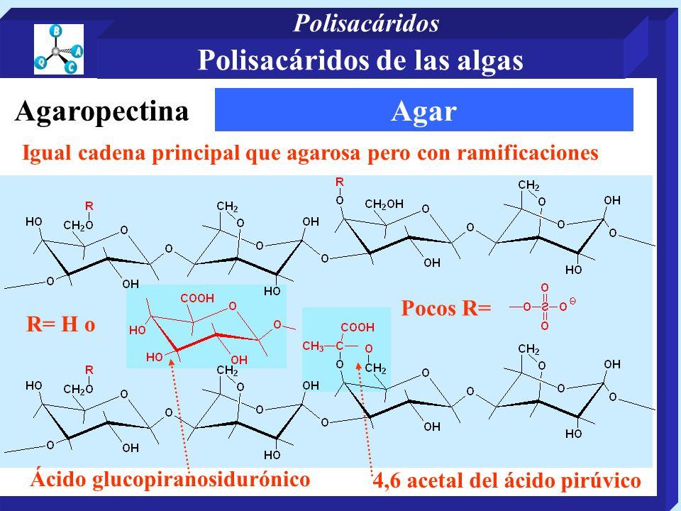 Agar 4,6 acetal del ácido pirúvico Ácido glucopiranosidurónico Igual cadena principal que agarosa pero con ramificaciones R= H o Pocos R= Agaropectina Polisacáridos de las algas Polisacáridos