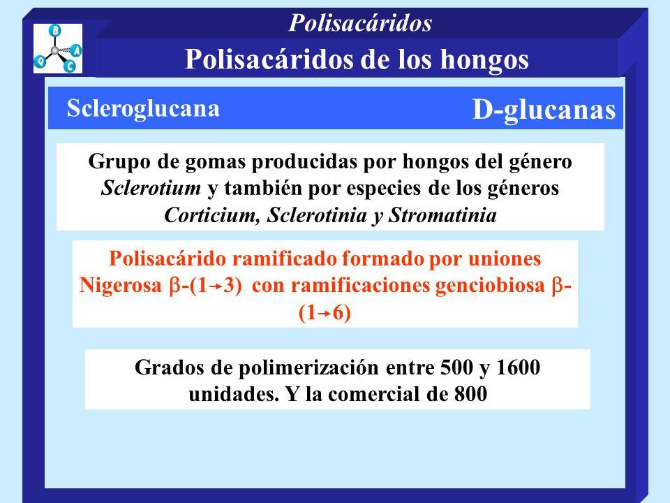 D-glucanas Scleroglucana Grupo de gomas producidas por hongos del género Sclerotium y también por especies de los géneros Corticium, Sclerotinia y Stromatinia Polisacárido ramificado formado por uniones Nigerosa -(1 3) con ramificaciones genciobiosa - (1 6) Grados de polimerización entre 500 y 1600 unidades.