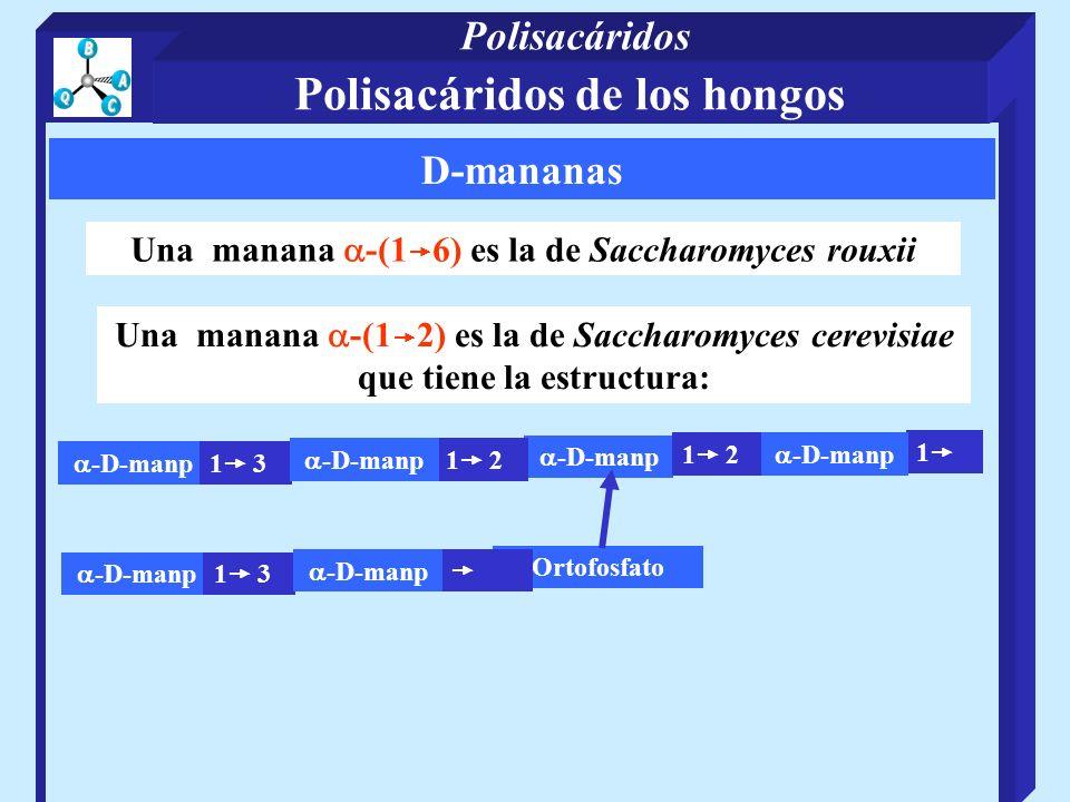 D-mananas Una manana -(1 6) es la de Saccharomyces rouxii Una manana -(1 2) es la de Saccharomyces cerevisiae que tiene la estructura: -D-manp 1 3 -D-