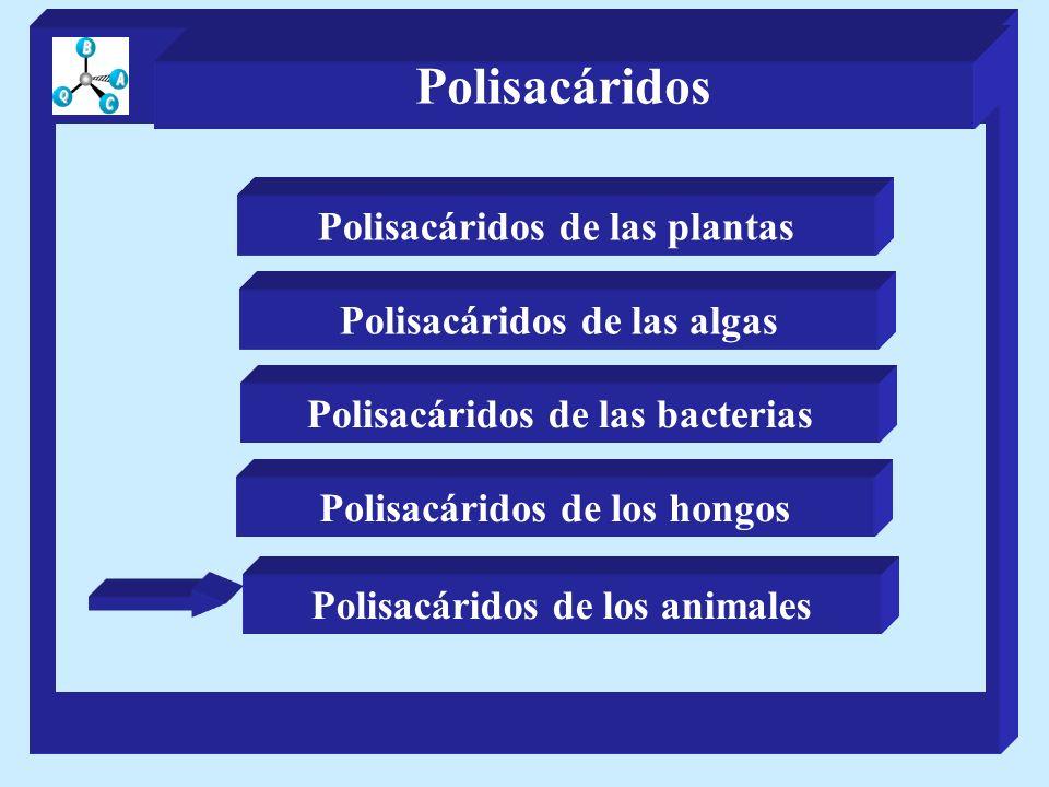 Polisacáridos de las plantas Polisacáridos de las algas Polisacáridos de los hongos Polisacáridos de las bacterias Polisacáridos de los animales Polis