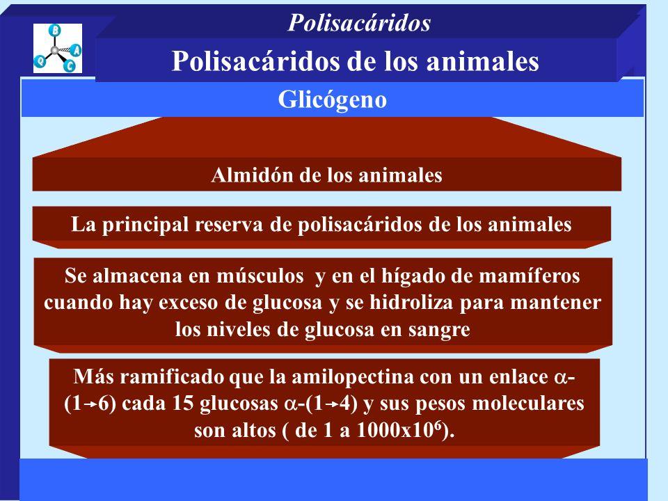 Almidón de los animales Más ramificado que la amilopectina con un enlace - (1 6) cada 15 glucosas -(1 4) y sus pesos moleculares son altos ( de 1 a 1000x10 6 ).