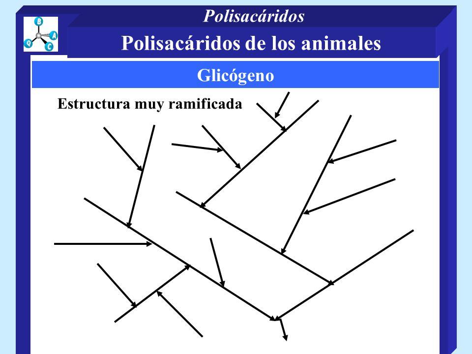 Glicógeno Estructura muy ramificada Polisacáridos de los animales Polisacáridos