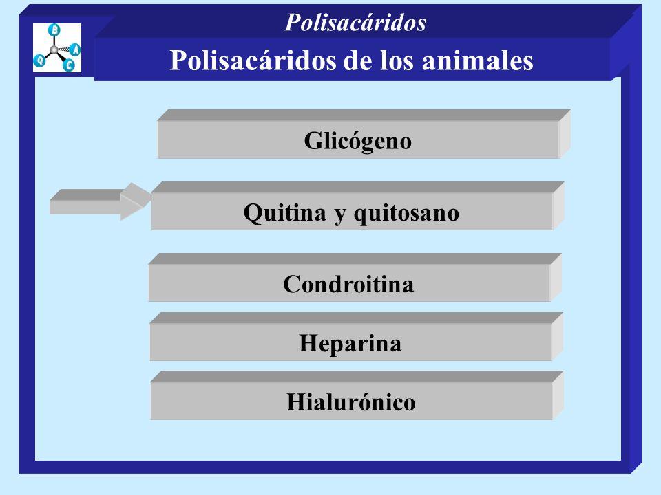Condroitina Heparina Hialurónico Quitina y quitosano Glicógeno Polisacáridos de los animales Polisacáridos