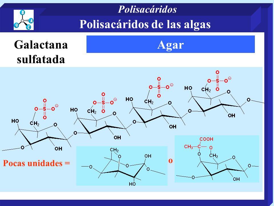 Agar o Pocas unidades = Galactana sulfatada Polisacáridos de las algas Polisacáridos