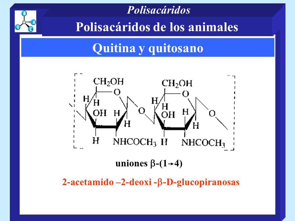 Quitina y quitosano uniones -(1 4) 2-acetamido –2-deoxi - -D-glucopiranosas Polisacáridos de los animales Polisacáridos