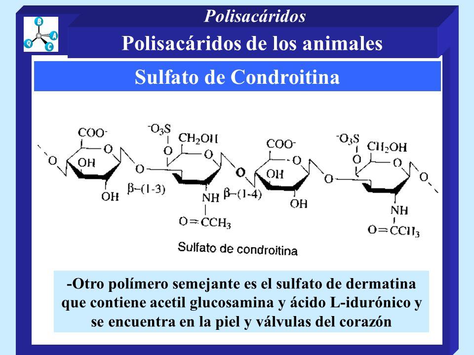 Sulfato de Condroitina -Otro polímero semejante es el sulfato de dermatina que contiene acetil glucosamina y ácido L-idurónico y se encuentra en la pi