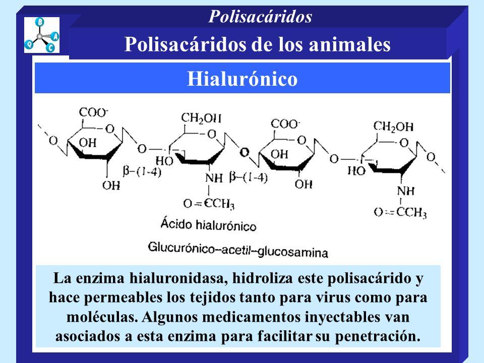 Hialurónico La enzima hialuronidasa, hidroliza este polisacárido y hace permeables los tejidos tanto para virus como para moléculas. Algunos medicamen