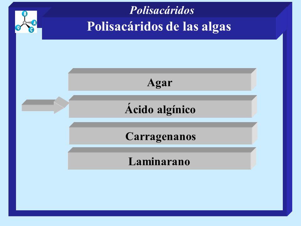 Polisacáridos capsulares Mientras que pocos tienen estructuras complejas como la del pòlisacárido de Klebsiella del serotipo K50 -D-galp 2 1 -D-galp -D-glcp 3 1 4 -D-glcpA -D-manp 1 3 1 -D-glcp -D-manp 6 1 1 6 Polisacáridos de las bacterias Polisacáridos
