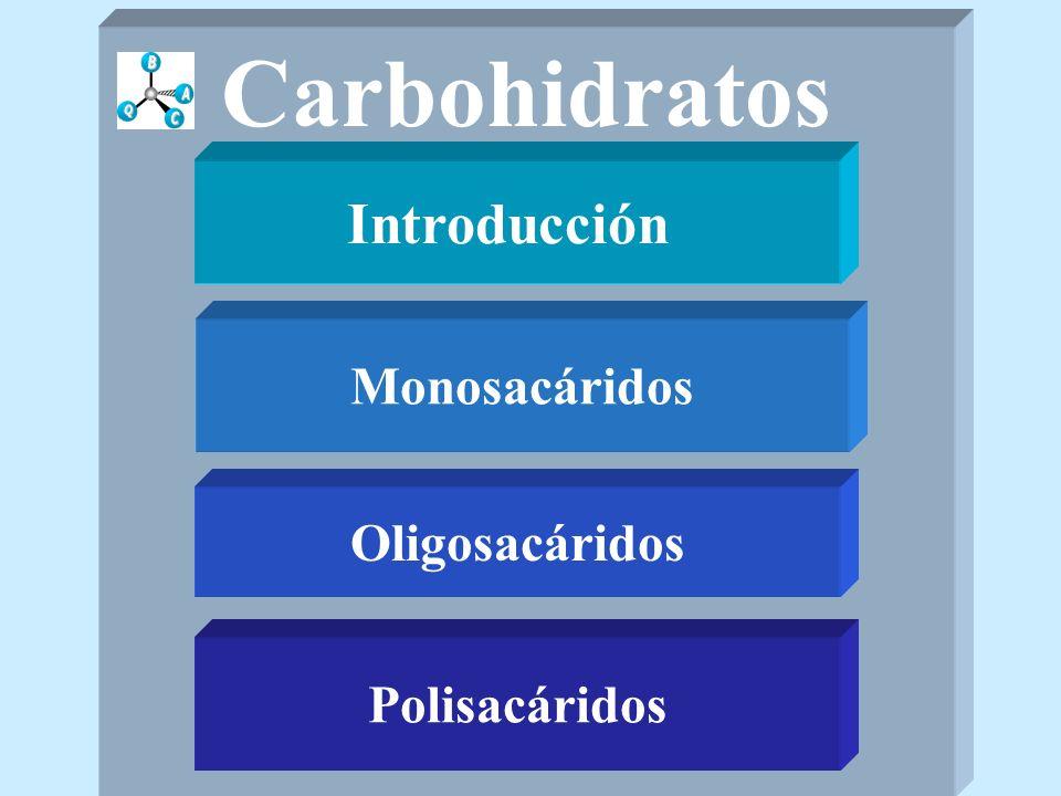 Introducción Monosacáridos Polisacáridos Oligosacáridos