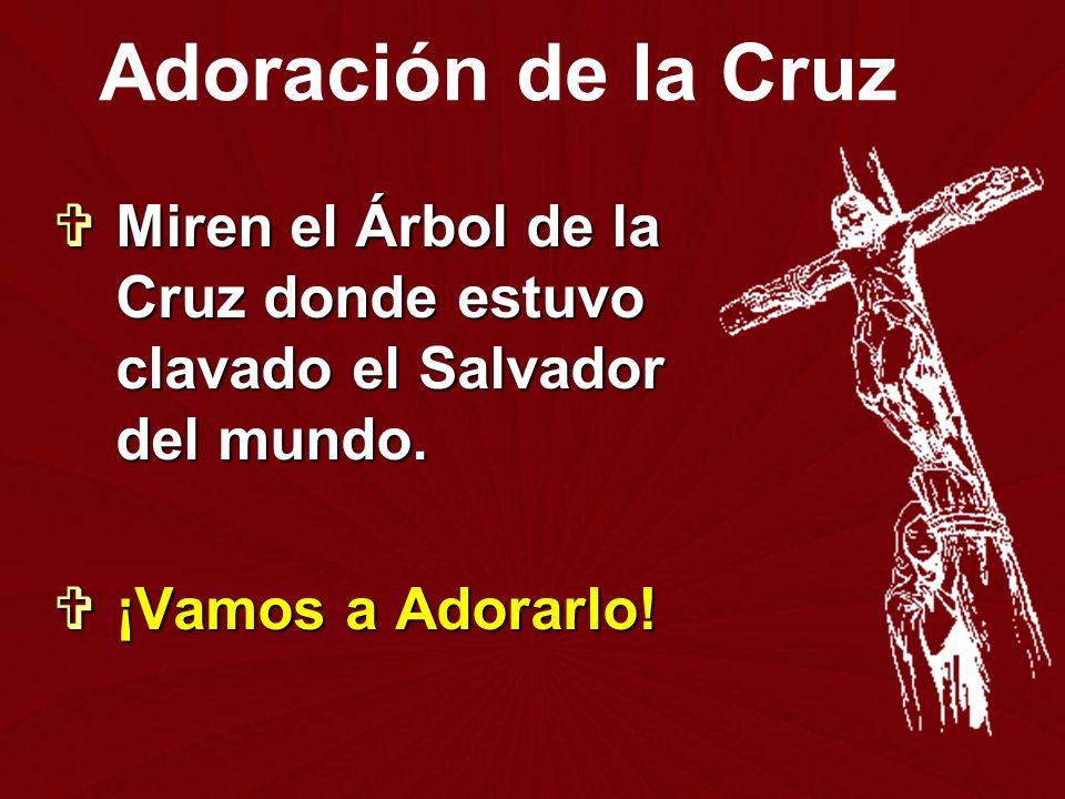 Miren el Árbol de la Cruz donde estuvo clavado el Salvador del mundo. Miren el Árbol de la Cruz donde estuvo clavado el Salvador del mundo. ¡Vamos a A