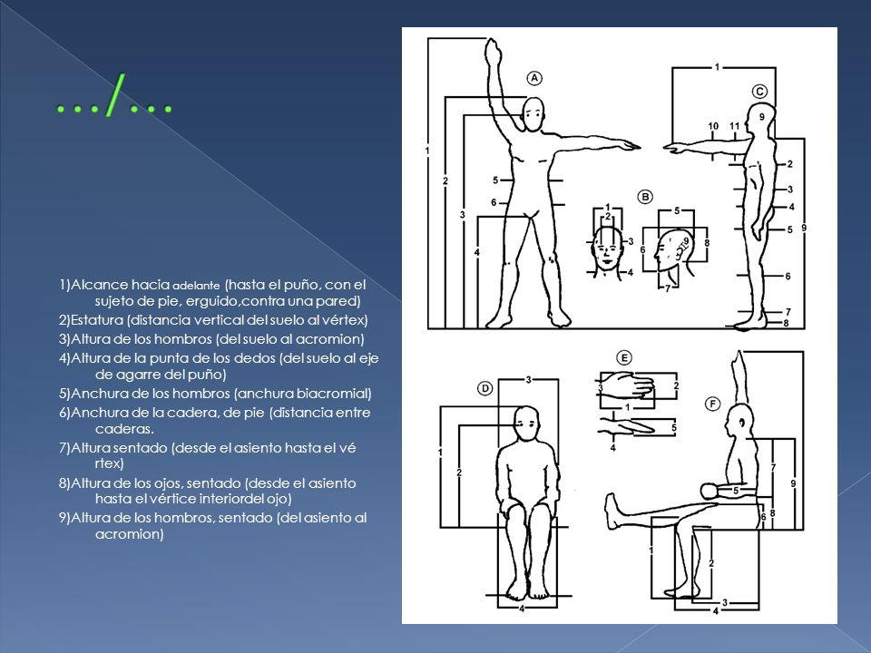1)Alcance hacia adelante (hasta el puño, con el sujeto de pie, erguido,contra una pared) 2)Estatura (distancia vertical del suelo al vértex) 3)Altura