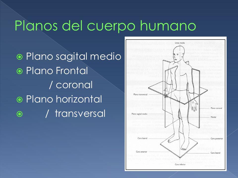 Plano sagital medio Plano Frontal / coronal Plano horizontal / transversal