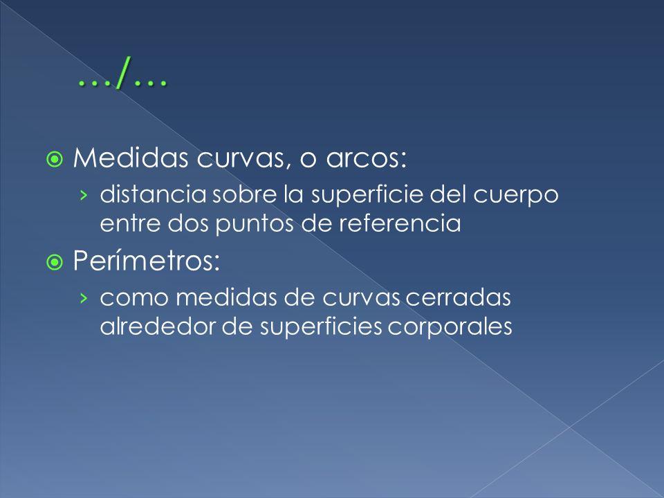 Medidas curvas, o arcos: distancia sobre la superficie del cuerpo entre dos puntos de referencia Perímetros: como medidas de curvas cerradas alrededor