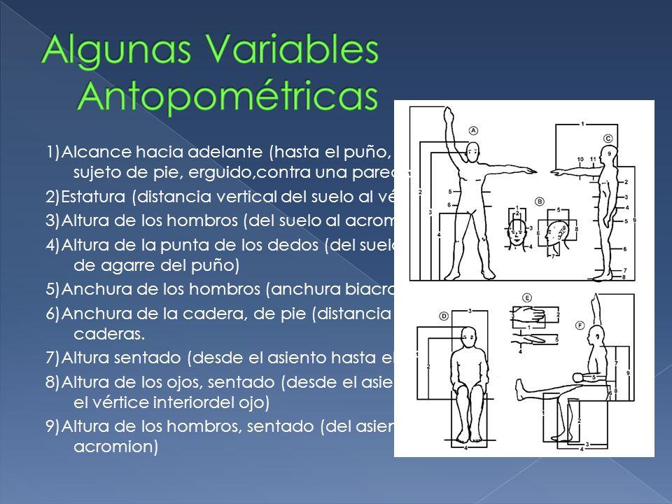 10)Altura de las rodillas (desde el apoyo de los pies hasta la superficie superior del muslo) 11)Longitud de la parte inferior de la pierna (altura de la superficie deasiento).