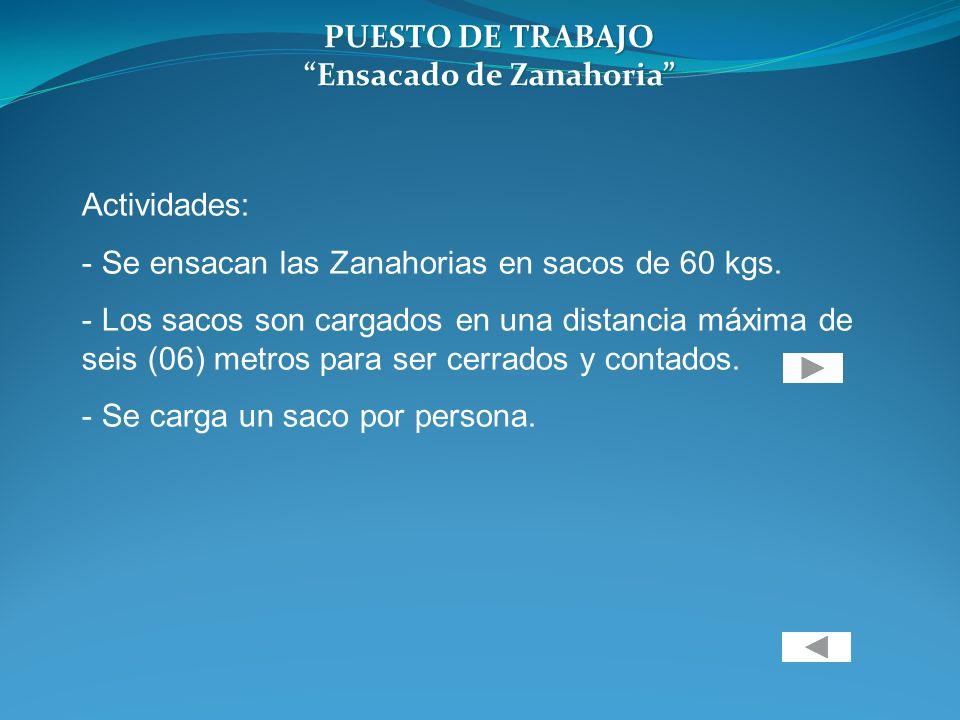 PUESTO DE TRABAJO Ensacado de Zanahoria Actividades: - Se ensacan las Zanahorias en sacos de 60 kgs. - Los sacos son cargados en una distancia máxima