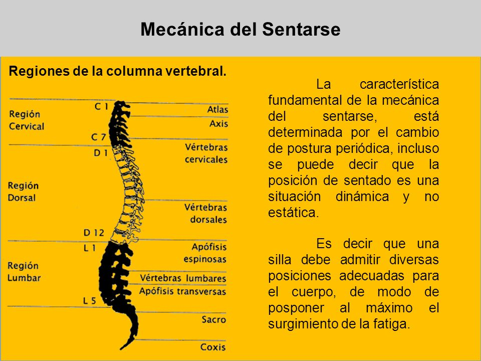 Mecánica del Sentarse Regiones de la columna vertebral. La característica fundamental de la mecánica del sentarse, está determinada por el cambio de p