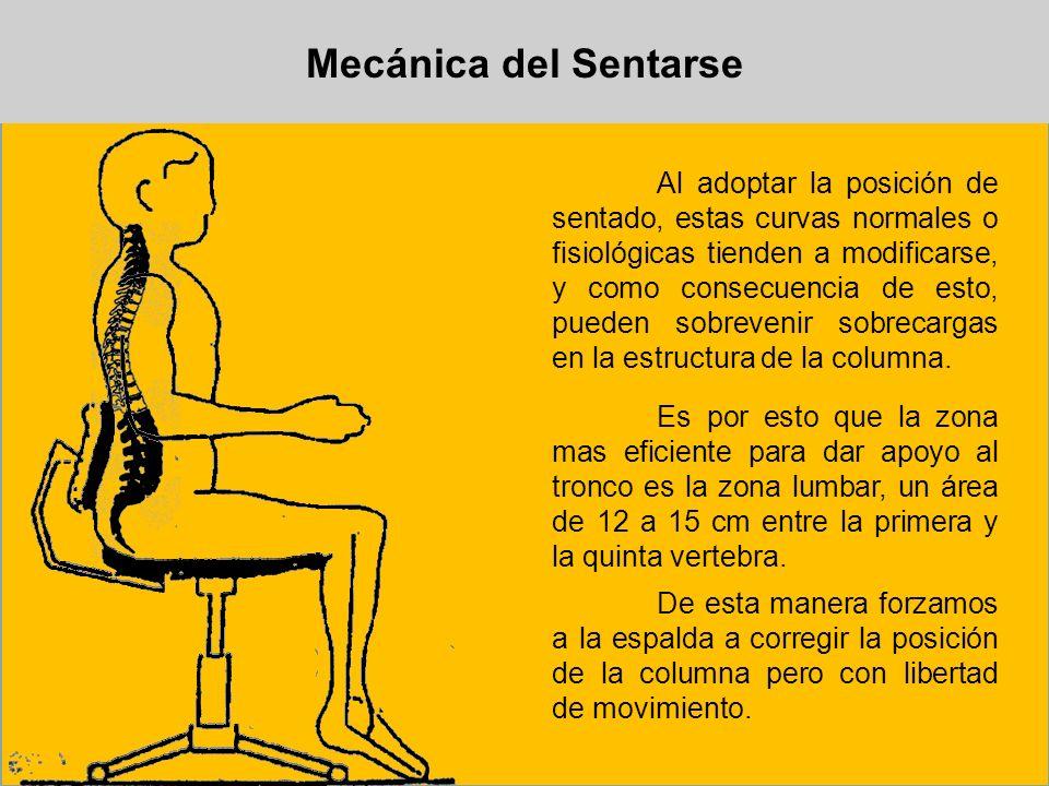Mecánica del Sentarse Al adoptar la posición de sentado, estas curvas normales o fisiológicas tienden a modificarse, y como consecuencia de esto, pued