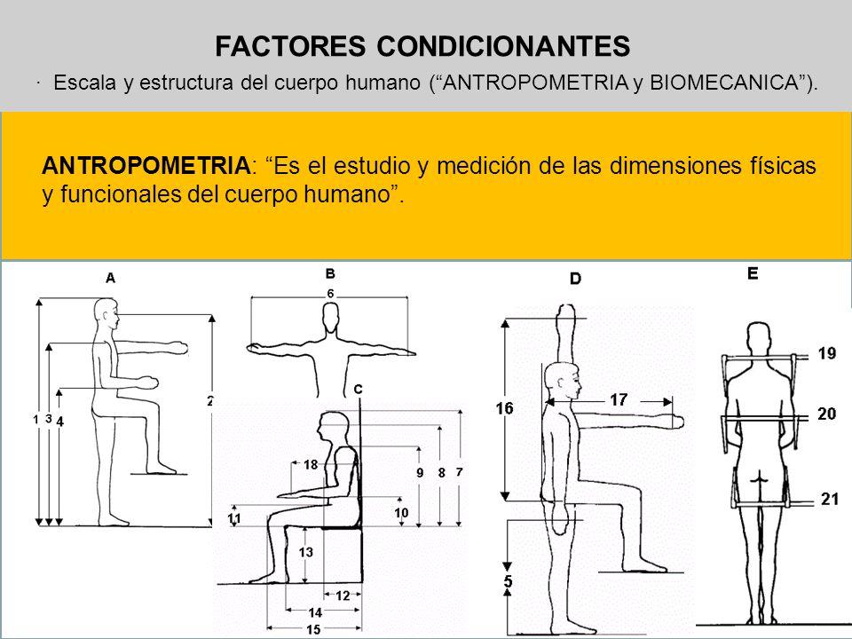 FACTORES CONDICIONANTES · Escala y estructura del cuerpo humano (ANTROPOMETRIA y BIOMECANICA). ANTROPOMETRIA: Es el estudio y medición de las dimensio