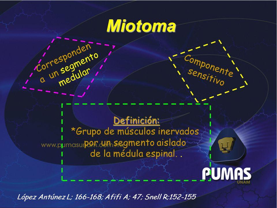 Miotoma Definición: *Grupo de músculos inervados por un segmento aislado de la médula espinal.. Corresponden a un segmento medular Componente sensitiv