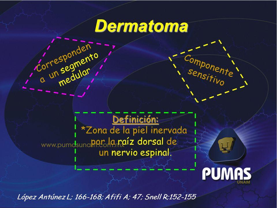 Dermatoma Definición: *Zona de la piel inervada por la raíz dorsal de un nervio espinal. Corresponden a un segmento medular Componente sensitivo López