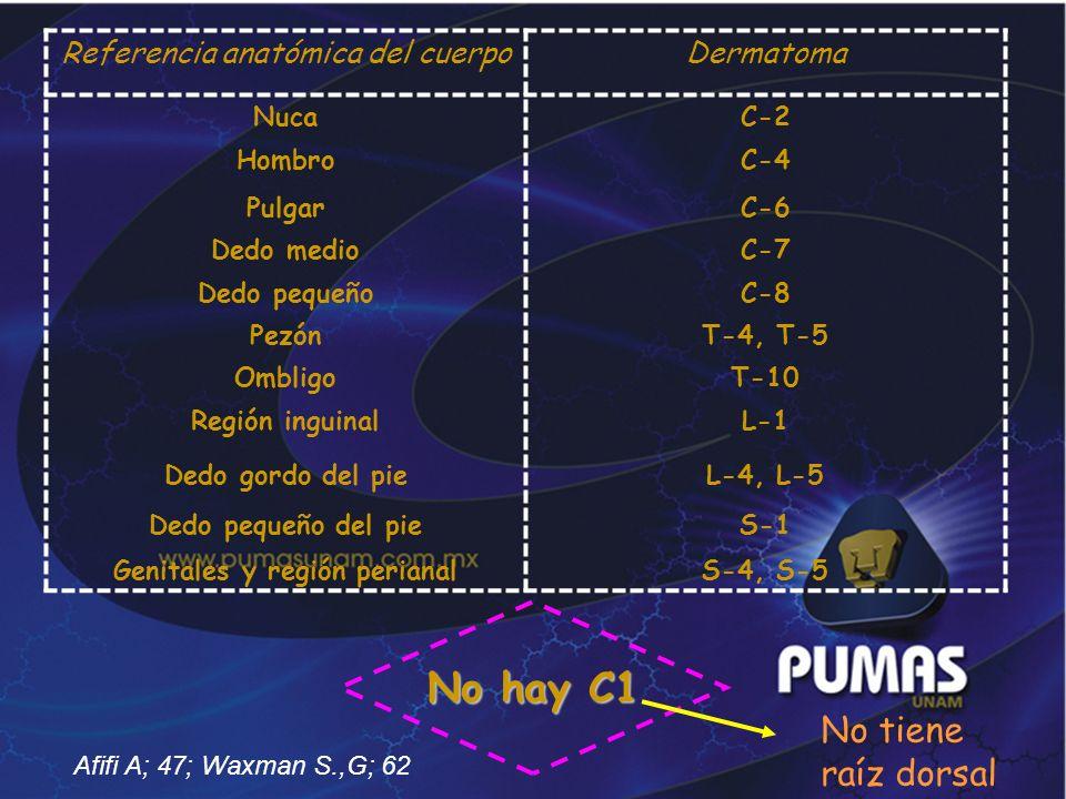 No hay C1 Referencia anatómica del cuerpoDermatoma NucaC-2 HombroC-4 PulgarC-6 Dedo medioC-7 Dedo pequeñoC-8 PezónT-4, T-5 OmbligoT-10 Región inguinal
