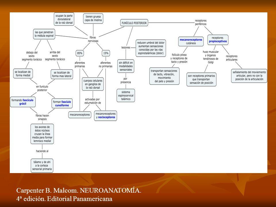 Carpenter B. Malcom. NEUROANATOMÍA. 4ª edición. Editorial Panamericana