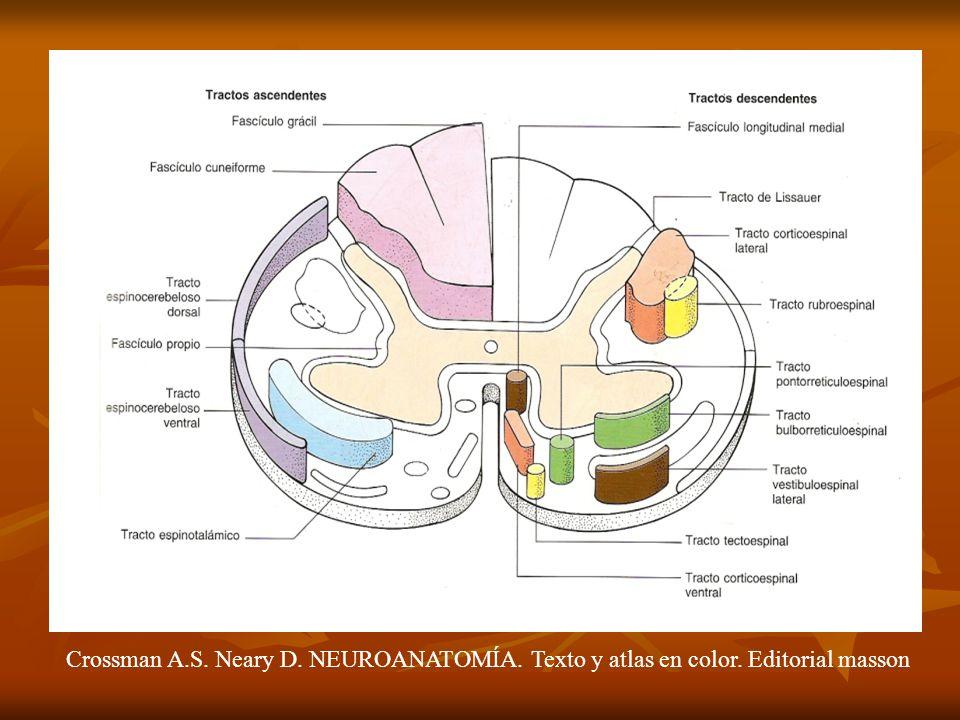 Crossman A.S. Neary D. NEUROANATOMÍA. Texto y atlas en color. Editorial masson