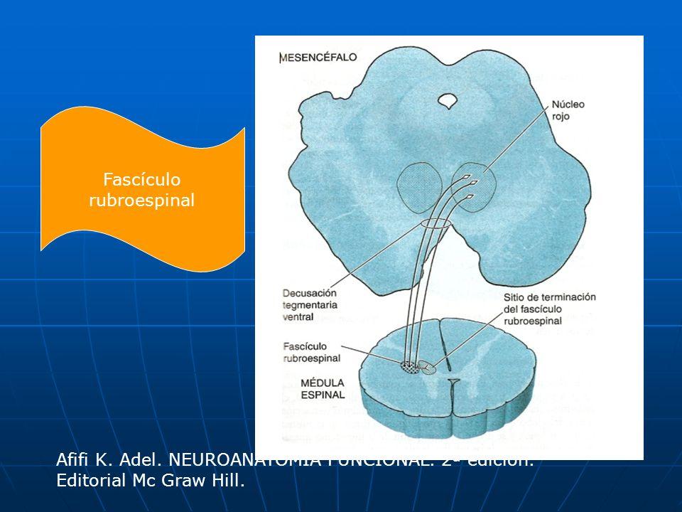 Fascículo rubroespinal Afifi K. Adel. NEUROANATOMÍA FUNCIONAL. 2ª edición. Editorial Mc Graw Hill.