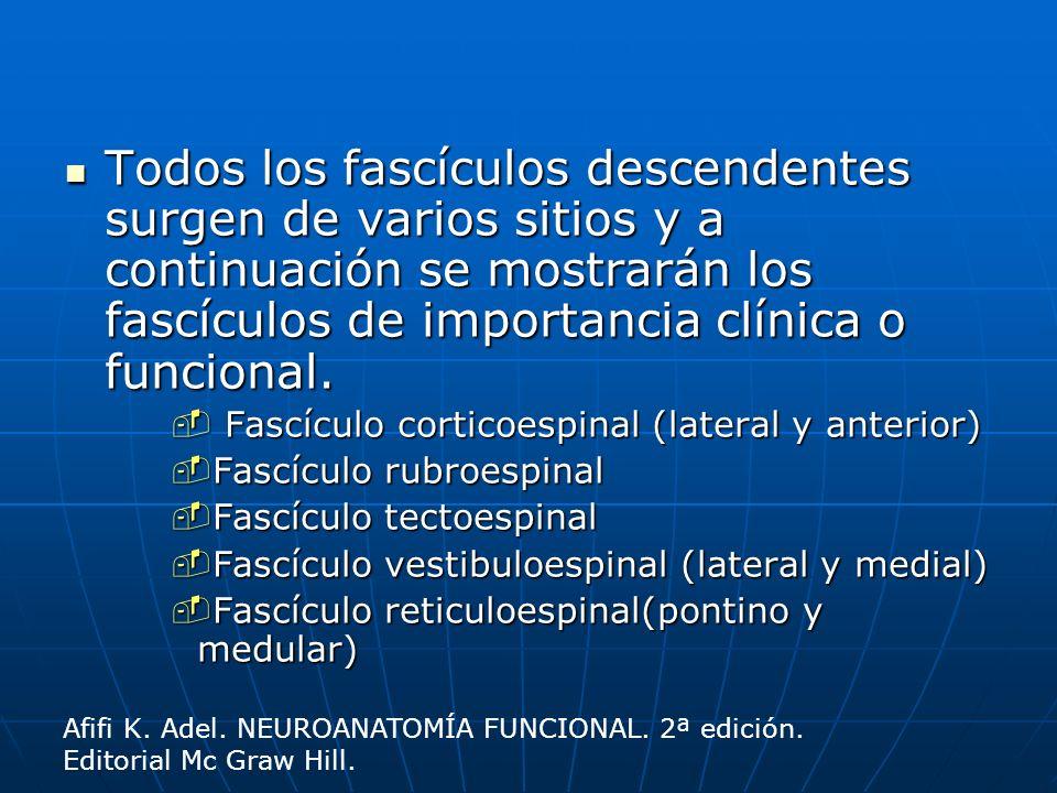 Todos los fascículos descendentes surgen de varios sitios y a continuación se mostrarán los fascículos de importancia clínica o funcional. Todos los f