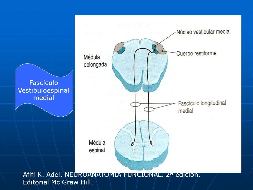 Fascículo Vestibuloespinal medial Afifi K. Adel. NEUROANATOMÍA FUNCIONAL. 2ª edición. Editorial Mc Graw Hill.