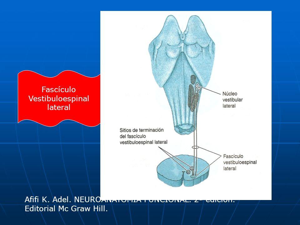 Fascículo Vestibuloespinal lateral Afifi K. Adel. NEUROANATOMÍA FUNCIONAL. 2ª edición. Editorial Mc Graw Hill.