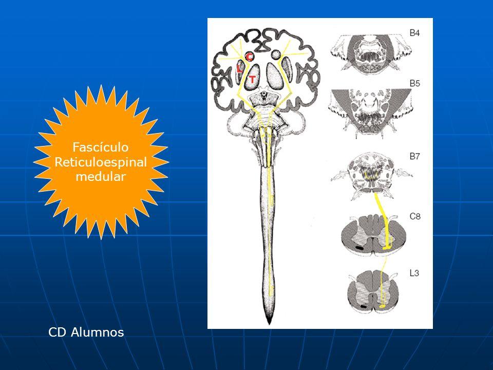 Fascículo Reticuloespinal medular CD Alumnos