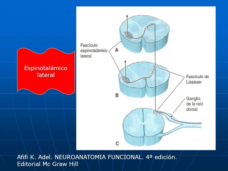 Espinotalámico lateral Afifi K. Adel. NEUROANATOMIA FUNCIONAL. 4ª edición. Editorial Mc Graw Hill