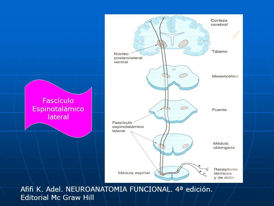 Fascículo Espinotalámico lateral Afifi K. Adel. NEUROANATOMIA FUNCIONAL. 4ª edición. Editorial Mc Graw Hill