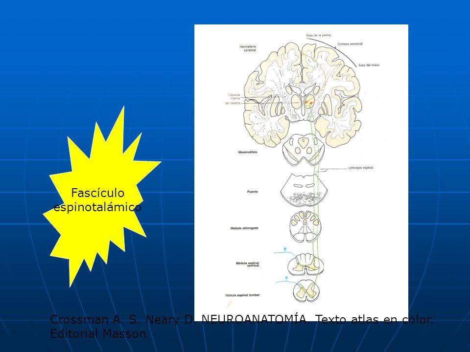 Fascículo espinotalámico Crossman A. S. Neary D. NEUROANATOMÍA. Texto atlas en color. Editorial Masson