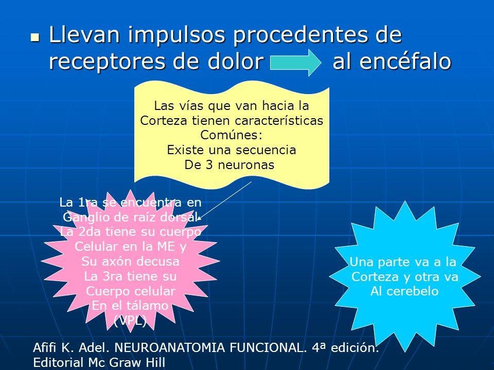 Espinotalámico lateral Corteza somatosensorial primaria Corteza somatosensorial primaria llega a llega a Tálamo (VPL) Tálamo (VPL) asciende por todo el tallo asciende por todo el tallo Tracto espinotalámico lateral Tracto espinotalámico lateral decusa y forma decusa y forma Lámina II en ME Lámina II en ME llega a llega a Ganglio dorsal Ganglio dorsal pasa al pasa al Receptor (nociceptores) Receptor (nociceptores) Transmite dolor Y temperatura Snell Richard S.