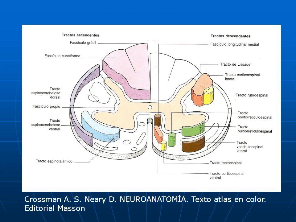 Tálamo (VPM) Corteza somatosensorial termina termina en en Lemnisco medio ascienden ascienden como como Fibras arquedas internas decusan decusan como como Médula oblonga ascienden ascienden hasta hasta Ganglio post.