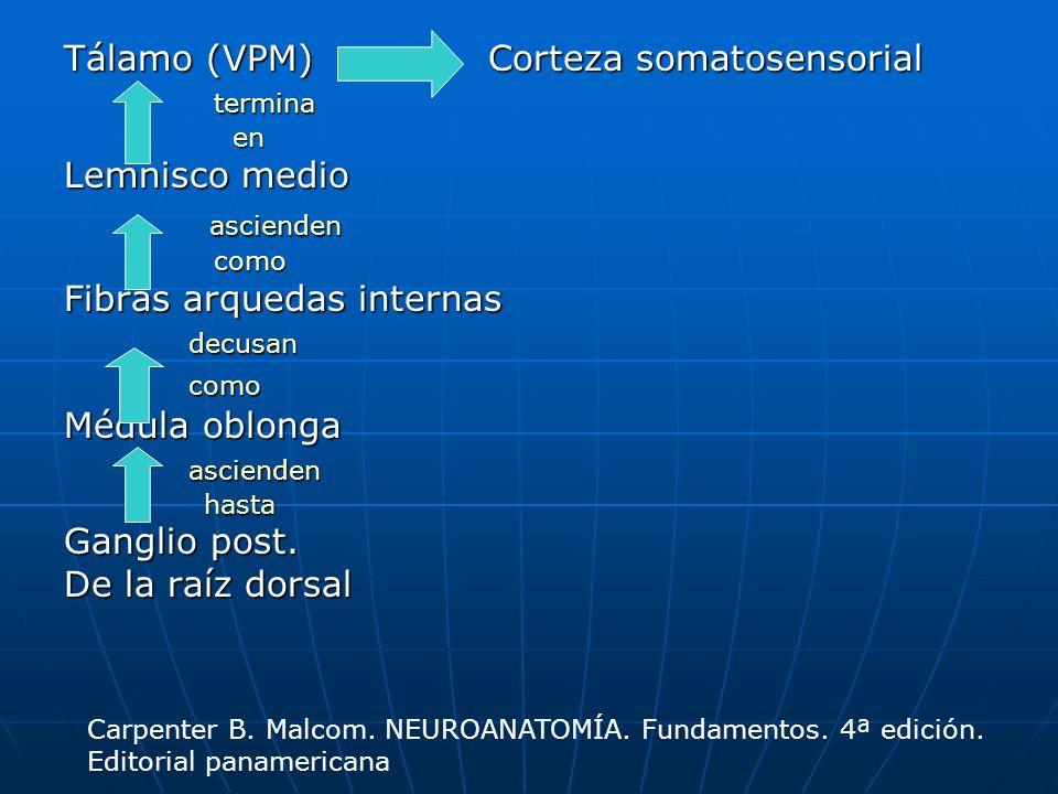 Espinotalámico anterior Corteza somatosensorial primaria Corteza somatosensorial primaria llega hasta llega hasta Tálamo (VPL) Tálamo (VPL) pasa por pasa por Fascículo espinotalámico anterior Fascículo espinotalámico anterior forman el forman el Comisura blanca anterior Comisura blanca anterior cruzan en cruzan en Láminas VII a VIII en ME Láminas VII a VIII en ME llega a llega a Ganglio dorsal Ganglio dorsal pasa al pasa al Receptor Receptor Conducen impulsos de Dolor además de tacto Algunas fibras ascienden Ipsolaterales hasta El mesencéfalo donde Se decusan y se Proyectan en n.