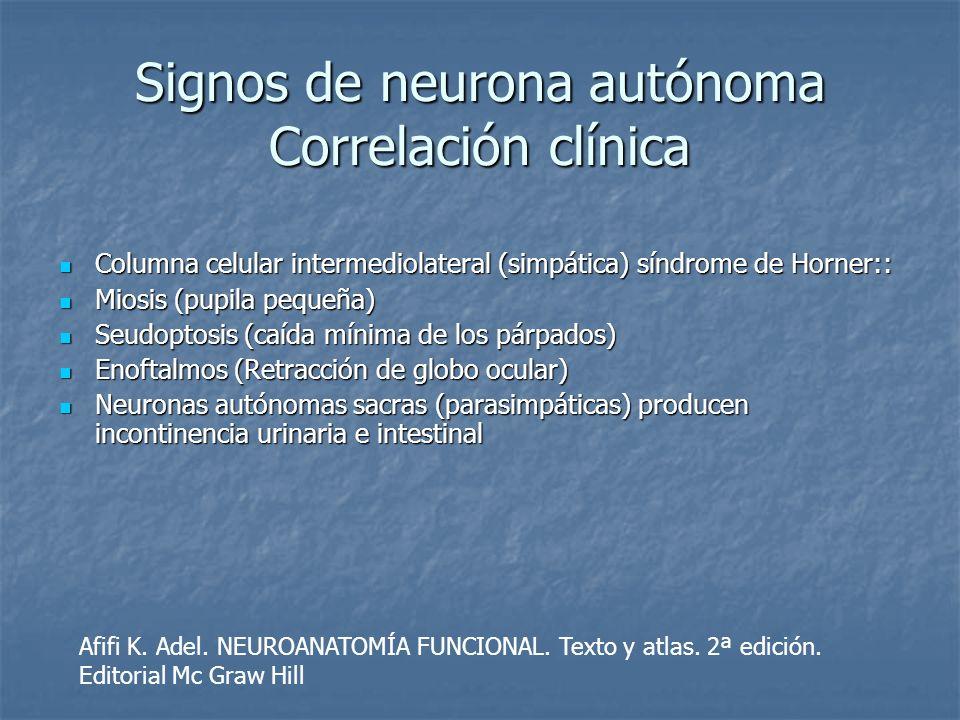 Signos de neurona autónoma Correlación clínica Columna celular intermediolateral (simpática) síndrome de Horner:: Columna celular intermediolateral (s