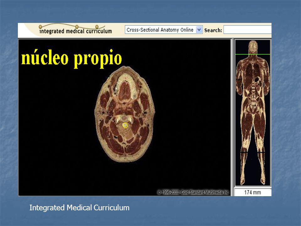 Asta intermediolateral Se limita a los segmentos torácicos y lumbares superiores Se limita a los segmentos torácicos y lumbares superiores Contiene neuronas preganglionares del SNS axones forman fibras nerviosas preganglionares y salen de la ME a través de raíz ventral.