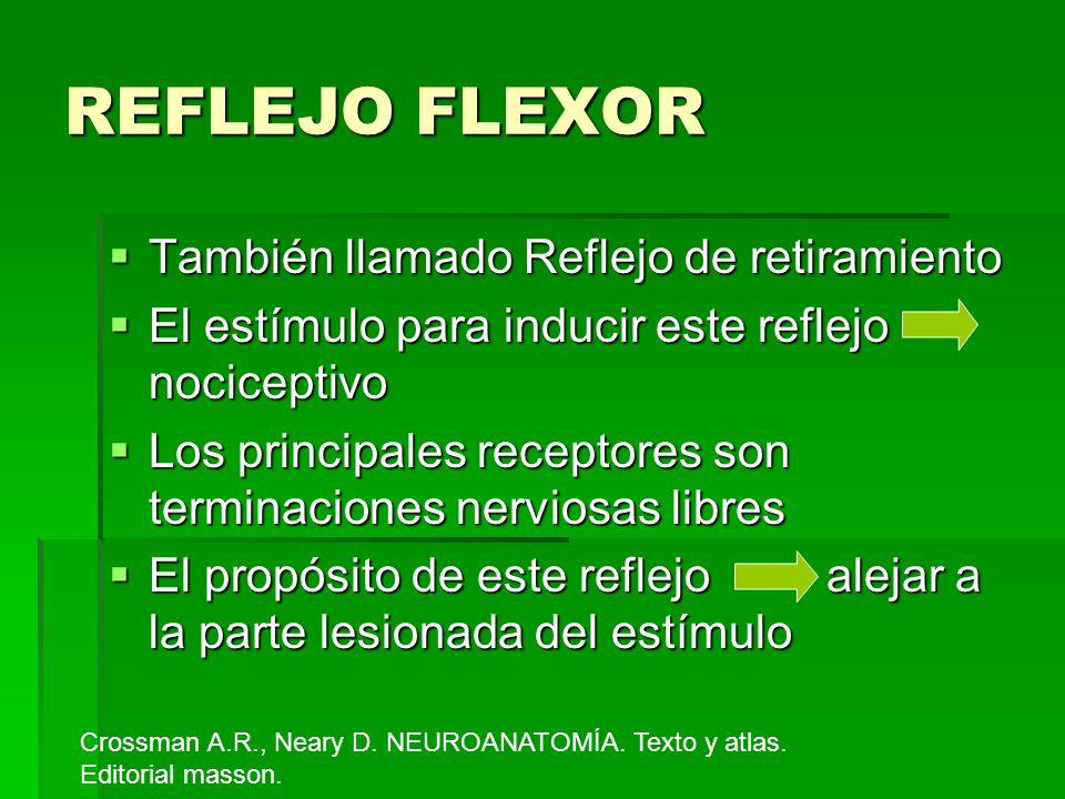 REFLEJO FLEXOR También llamado Reflejo de retiramiento También llamado Reflejo de retiramiento El estímulo para inducir este reflejo nociceptivo El es